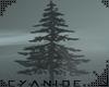 -C- Black Fir Tree