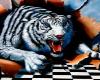 tiger dop