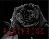 BlackRose Pants