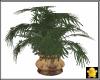 C2u Elegance Potted Palm