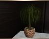 Parlor Plant