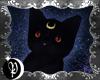 🌙 Luna 🌙