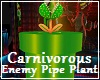 Canivorous Pipe Plant