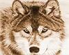 wolf hangout rug
