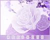 [HIME] Violy Leg Roses