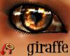 Wild.Eyes Giraffe (m)