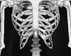 Skeleton v2
