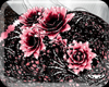 ! Hip Flowers BlackPink