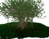 Dj Light Giant Tree Anmt