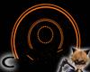 (C) Orange Portal