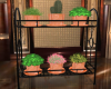 6 plants/stand