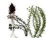 Live Seaweed