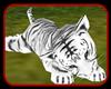 !    TIGRE ALBINO BEBE