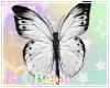 B  Nose Butterfly W/B