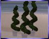 Mz. Spiral Tree
