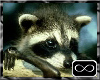 [CFD]Hanging Raccoon