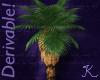 Tropical, CA Fan Palm