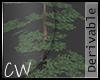 .CW.LostLake-Pine tree