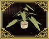 Plants Romance 1