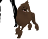 PET Adult Poodle-Choco