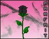 (*Par*) Black Rose