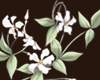 Chinese Summer Orchids 3