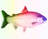 Rainbow Glow fish avi