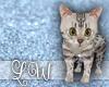 Kitten|Egyptian Mau