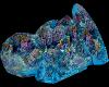coral rocks