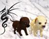 [LD]Playful Puppies