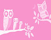 Baby Girl Owl Picture