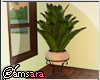 •S.P. Palm Leaf Plant