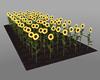 Sun Flowers Derivable