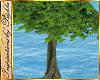 I~Rainbow Beach Tree