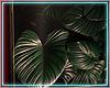 ○ Tropical Frame III