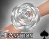 Cat~Transition Pure.Bra