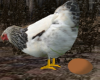 ☢ Chicken Egg