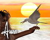 Animated Sea Gulls