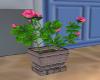 Roses Pink Pot