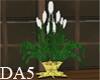 (A) Far Away Plant