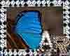 Butterfly Beauty Clip