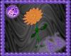 Bou Ornge Dancing Flower