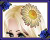 Delicate Hair Daisy