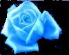 baby blue rose
