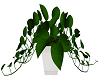 Planta Enredadera