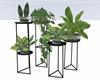 :3 Modern Indoor Plants