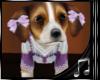 {M} G Beagle3 Pet w/S