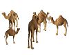 camels 3d