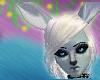 Winter Catcow Ears