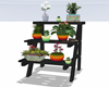 :3 Plant Ladder Stand